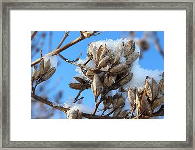 A Touch Of Winter Framed Print