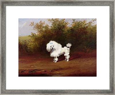 A Toy Poodle In A Landscape  Framed Print by Frederick French