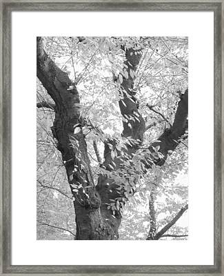 A Tree For All Seasons Framed Print