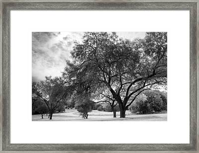 A Tree Grows Into An Evening Sky Framed Print by Ellie Teramoto