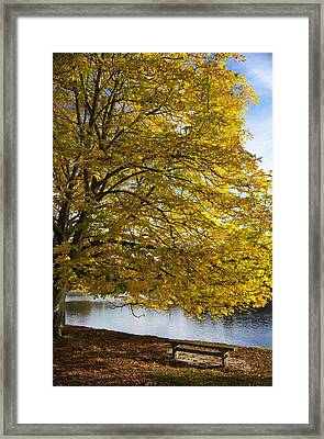 A Tree With Golden Leaves And A Park Framed Print
