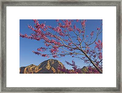 A Tree With Pink Blossoms In Red Rock Framed Print