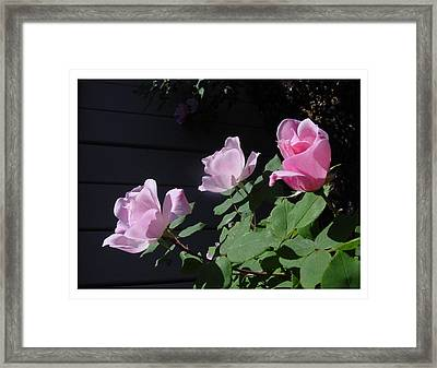 Framed Print featuring the photograph A Trio Of Beauty by Frank Wickham