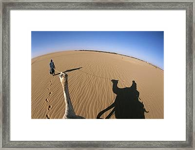 A Tuareg Tribesman Leads His Camel Framed Print by Carsten Peter