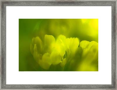 Framed Print featuring the photograph A Very Close Look by Penny Hunt