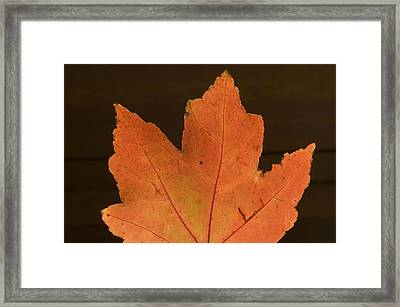 A Vibrant Colored Leaf Framed Print by Joel Sartore