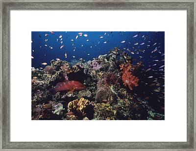A Vibrant Reef Scene With Varieties Framed Print