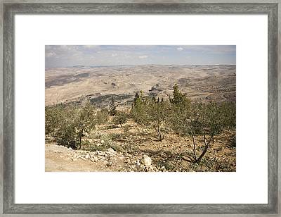A View Of Olive Trees And Moses Framed Print by Taylor S. Kennedy