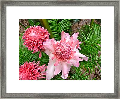A Walk In The Botantical Gardens Framed Print by Rosalinda LeBlanc