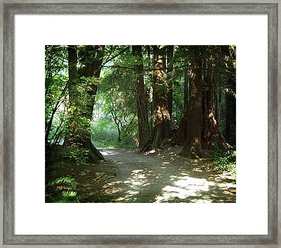 A Walk In The Forest Framed Print by Margaret Buchanan