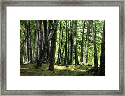 A Walk In The Forest Framed Print by Mike Flynn
