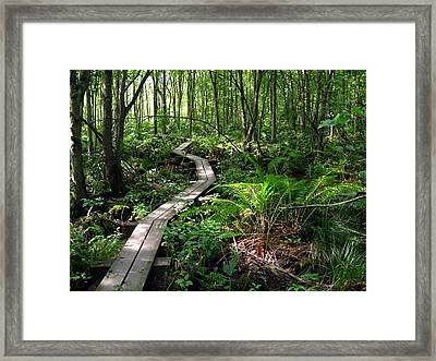 Framed Print featuring the photograph A Walk In The Woods by Doug McPherson