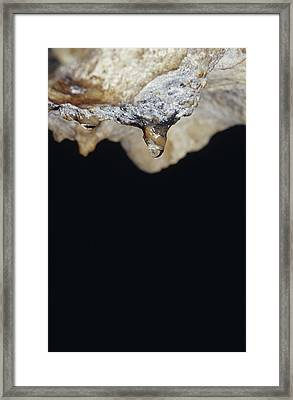 A Water Drop Seeps From A Stalagtite Framed Print by Jason Edwards