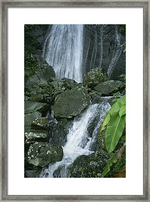 A Waterfall In El Yunque, Puerto Rico Framed Print by Taylor S. Kennedy