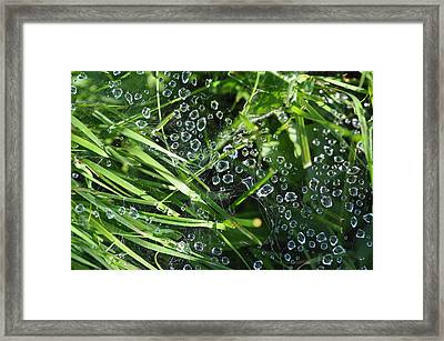 Framed Print featuring the photograph A Web Of Raindrops by Ronda Broatch