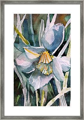 A Weepy Daffodil Framed Print by Mindy Newman