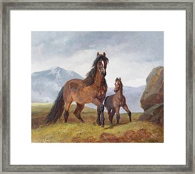 A Welsh Mountain Mare And Foal Framed Print