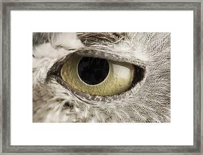 A Western Screech Owl Otus Kennicottii Framed Print by Joel Sartore