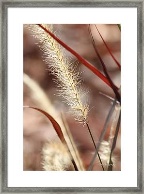 Framed Print featuring the photograph A Whisper In The Wind by Amy Gallagher