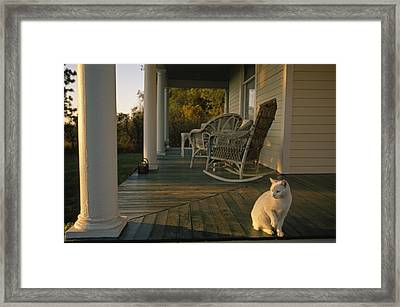 A White Cat In Sunlight On A Columned Framed Print by Joel Sartore