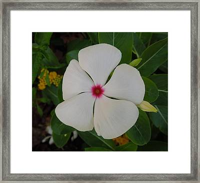 A White Star With A Red Center Framed Print by Chad and Stacey Hall