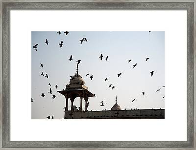 Framed Print featuring the photograph A Whole Flock Of Pigeons On The Top Of The Ramparts Of The Red Fort In New Delhi by Ashish Agarwal