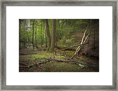 A Woodland Scene In Cades Cove No.471 Framed Print by Randall Nyhof