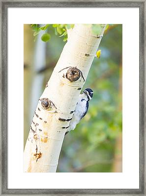 A Woodpeck Behind An Eye Of A Tree Framed Print