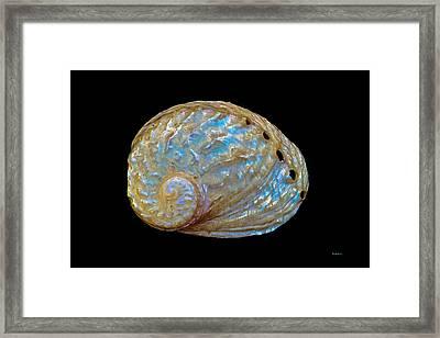 Abalone Shell Framed Print by Mitch Shindelbower