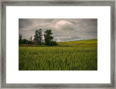 Abandoned Framed Print by Dan Mihai