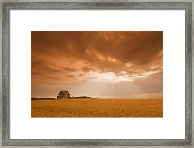 Abandoned Farm In Durum Wheat Field Framed Print by Dave Reede