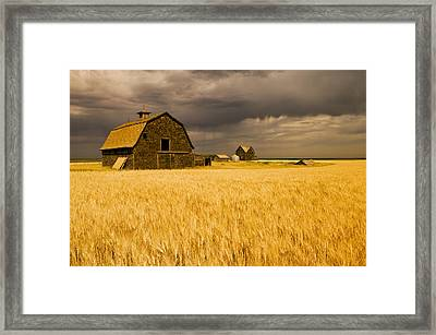 Abandoned Farm, Wind-blown Durum Wheat Framed Print by Dave Reede