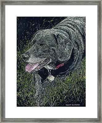 Abbe The Dog Framed Print by Robert Goudreau