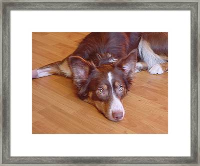 Framed Print featuring the photograph Abbey Feeling Down by Charles and Melisa Morrison