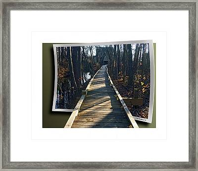 Abbotts Nature Trail Framed Print by Brian Wallace