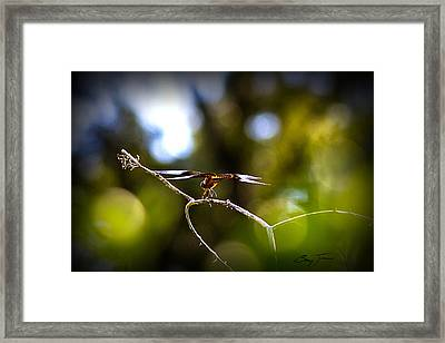 About To Plunge Framed Print by Barry Jones