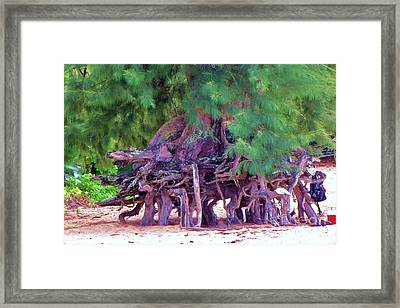 Framed Print featuring the photograph Above Ground Roots On Tamarisk Tree  by Michele Penner