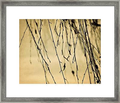 Abstract Branches Framed Print by Amelia Matarazzo
