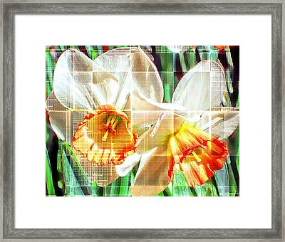 Abstract Daffodils  Framed Print by Cathie Tyler