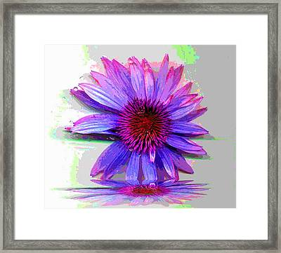 Framed Print featuring the photograph Abstract Daisy by Carolyn Repka