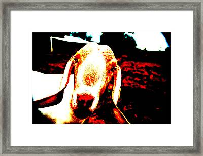 Abstract Goat Framed Print by Lon Casler Bixby
