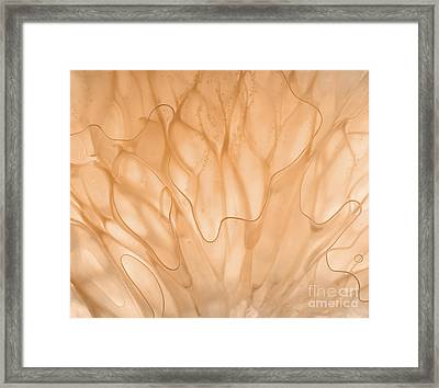 Abstract Grapefruit Framed Print by Janeen Wassink Searles