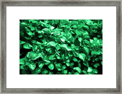 Framed Print featuring the photograph Abstract Greeen by Serene Maisey