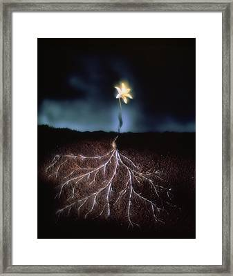 Abstract Image Of A Germinated Seed Framed Print by Phil Jude