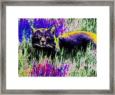 Abstract Of Tabby Framed Print