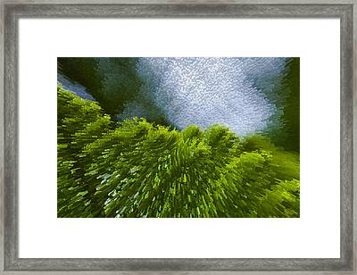 Abstract Pine Framed Print