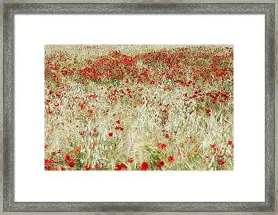 Abstract Poppies Framed Print by Guido Montanes Castillo
