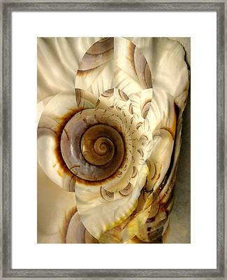 Abstract Seashell Framed Print by Shirley Sirois