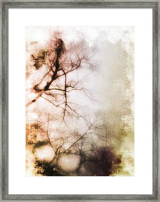 Abstract Trees Framed Print by David Ridley