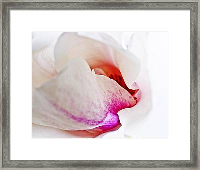 Abstract White Red Pink - Macro Flowers Fine Art Photography Framed Print by Artecco Fine Art Photography